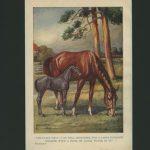 Original Vintage Antique horse Black Beauty print circa 1933