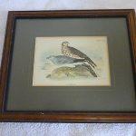 Antique Wyman & Sons Hen Harrier Colour Lithograph